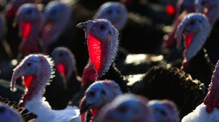 Poultry farmers must keep their birds indoors for 30 days.