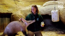 Zoo animals behaving badly - caught on camera
