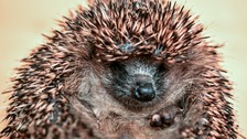 Brothers jailed for kicking hedgehog to death