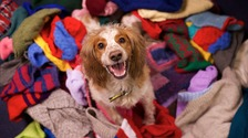 Animal welfare charity to deliver hampers for homeless dogs