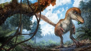 British scientists find feathered dinosaur tail preserved in amber