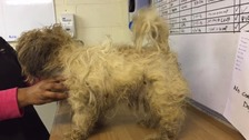 Severely matted dog found in Leicester
