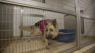 A dog in its kennel