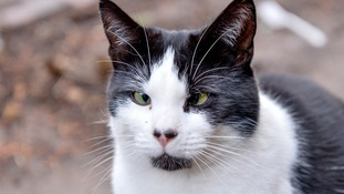 Dumped cross-eyed cat's looks putting off potential owners