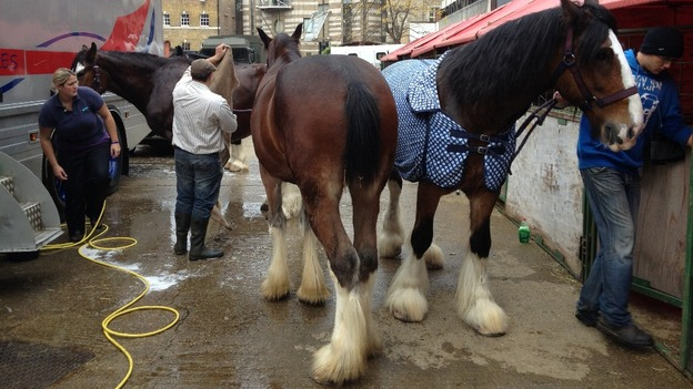 Horses prepared for The Lord Mayor's Show.