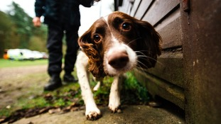 Police dogs sniff out drugs in Christmas crackdown