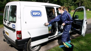 File photo of an RSPCA Officer with her van.
