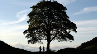 Sycamore Gap on Hadrian's Wall is 'Tree of the Year'