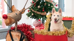 Gearing up for busiest time of year with homeless dogs