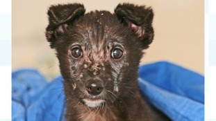 Hope for puppy 'abandoned days before Christmas'