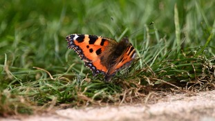 Britain's butterflies and bees struggle with unseasonable weather