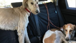 The dogs have been rescued and are now looking for new homes.