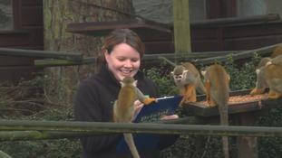 The big count at Bristol Zoo