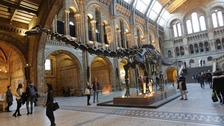 Dippy the Diplodocus going on tour and coming to Midlands