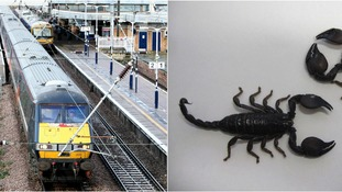 Train evacuated at Peterborough after pet scorpion escapes