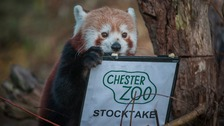 Chester zoo stock take