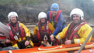 George the spaniel got stuck 40ft up a cliff on New Year's Day