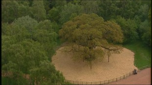 Chemicals firm to carry out surveys in Sherwood Forest
