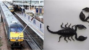 Train / Scorpion