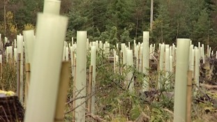Ash Dieback - Crisis talks at Holyrood