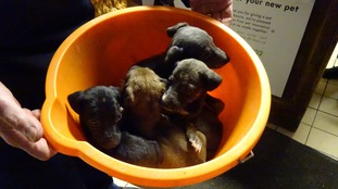 Abandoned puppies a 'Christmas miracle' says RSPCA