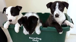 The puppies have been named Tosca, Carlos and Mabel.