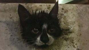 Kitten rescued after getting head stuck in bin