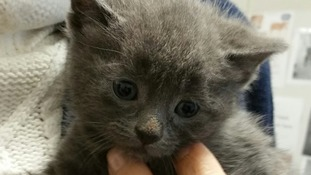 Litter of kittens dumped in a box days before Christmas need a new home
