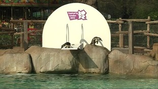 Penguins on the diving board
