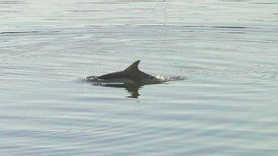Spotted! A dolphin swimming in the River Wear