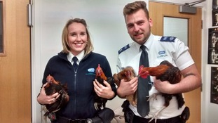 The RSPCA officers with the plucky foursome.