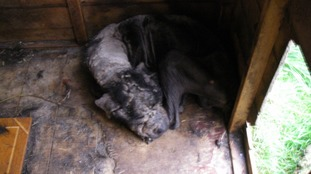 Dog left neglected in garden shed for three months