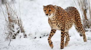 What's this white stuff? Animals brave the cold to explore the snow