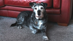 Jessie celebrates her 15th anniversary in foster home on Friday 13th