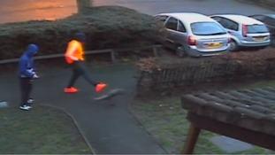 Shocking moment man kicks cat 'breaking its jaw' captured on CCTV