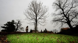 Oak trees across the country are under threat from ash dieback