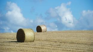 RSPCA funniest calls: Pile of hay mistaken for horse