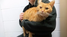 'Affectionate' cat found dumped in recycling bin in Stranraer