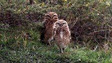 Hoots of two 'loved-up owls' spark coastguard alert in Devon