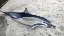 Washed up dolphin and porpoise numbers dramatically increase