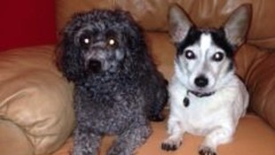 Warning after suspected dog poisoning attempt in Cardiff