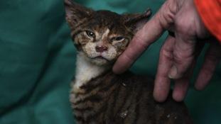 Kitten rescued in explosion