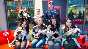Newcastle students beat 'Blue Monday' by petting Border Collie pups