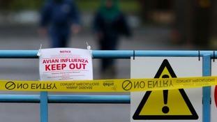 Confirmed case of avian flu on Lincolnshire farm
