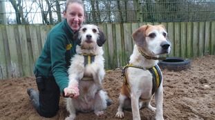 Delightful duo looking for their forever home