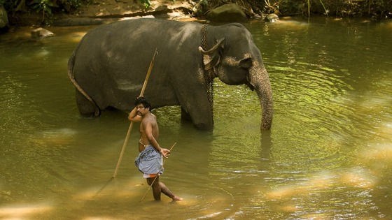 Elephant handlers wash down their elephants in Pinawella village near Kandy, Sri Lanka