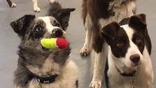 Dogs' Trust