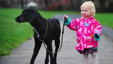 Rescue dog saves Cheshire toddler's life