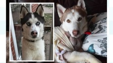 Marley (left) was killed instantly whilst Hugo (right) is still recovering after being shot.