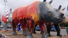 Funds raised by Exeter's 'rhinos' to help save real ones